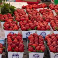 Fresh strawberries at a farmers market